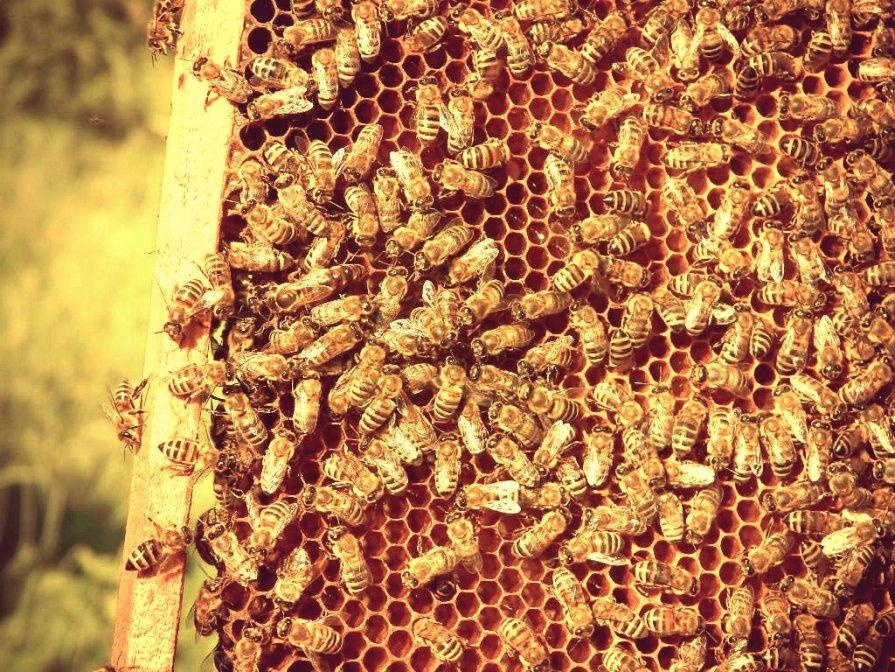 Производители мёда - Натали V