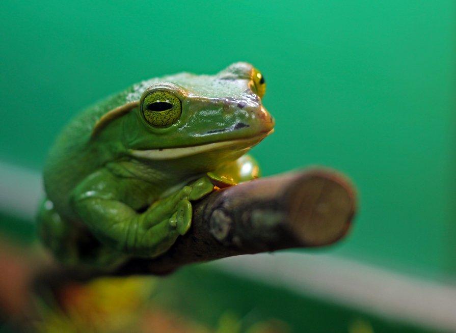 Лягушка - Виталий Острецов