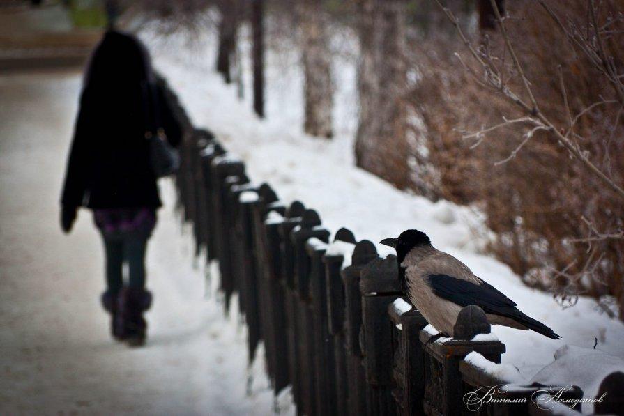 Дневной дозор - Виталий Ахмедьянов