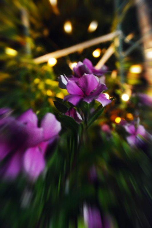 Ночные цветы - Анастасия Андреева
