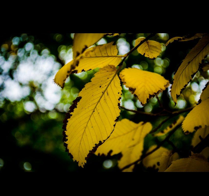 Сырой сентябрь дышит в спину, осень отпусти меня... - Настасья Емельянова