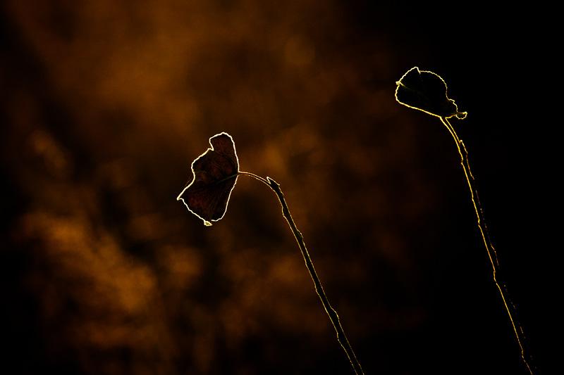 Осенний свет - Андрей Селиванов
