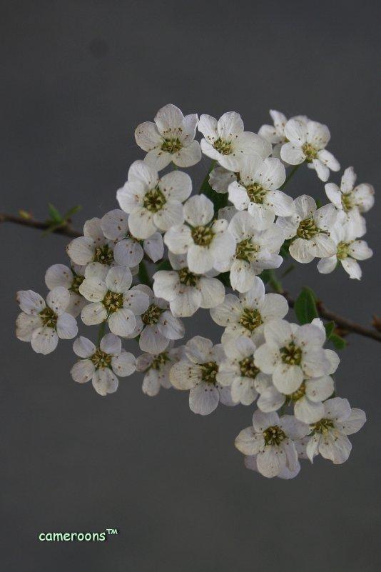 весной... - Сергей Румянцев
