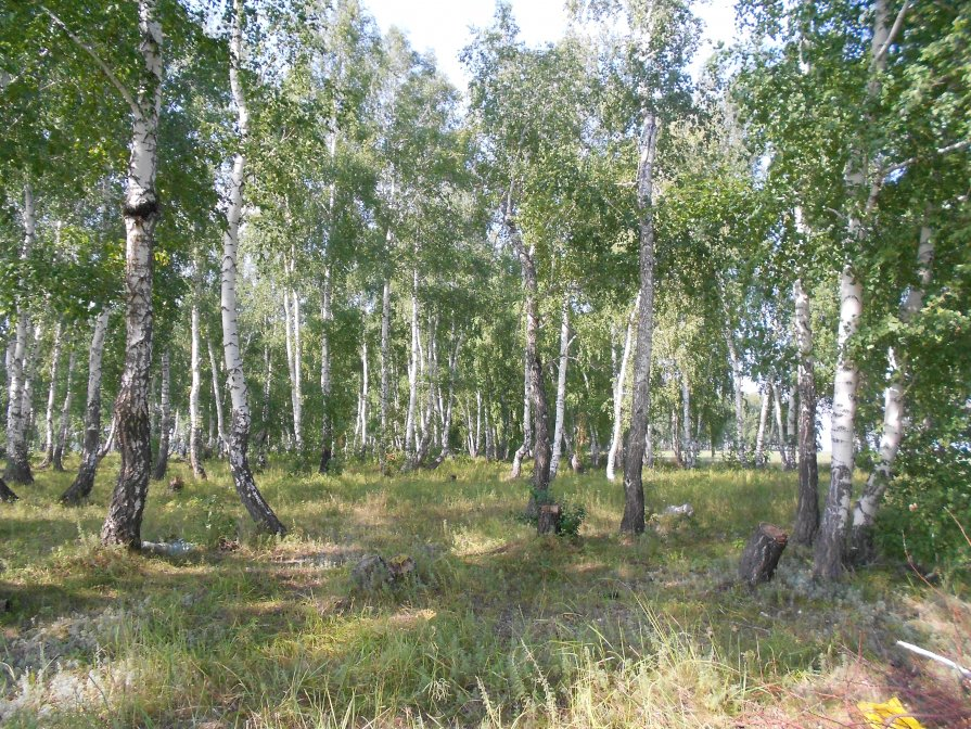 Армянский лес - Ольга Янцен
