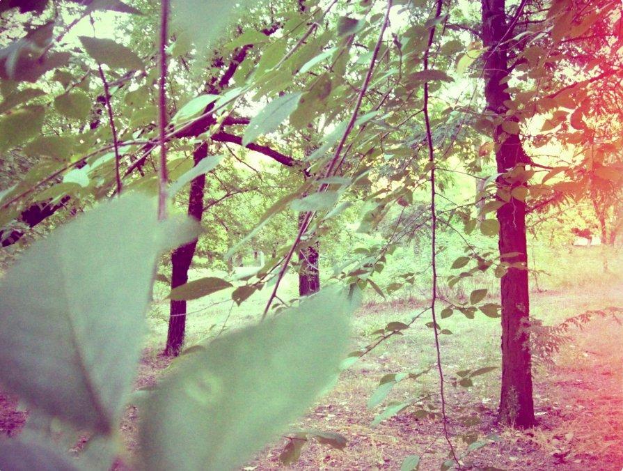 зеленый парк - Томка Богданюк