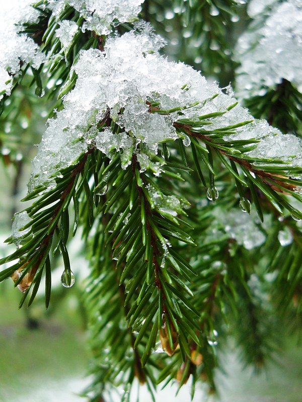 первый снег - Ирина Шабалина
