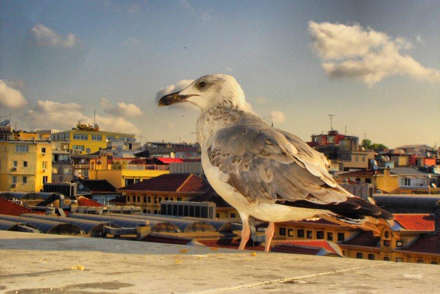 Чайка - Юлия Францева