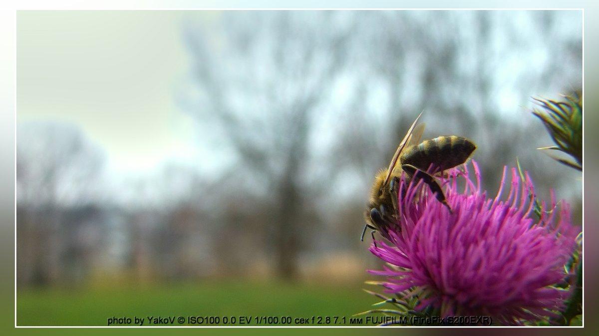 самая трудолюбивая пчела - YakoV