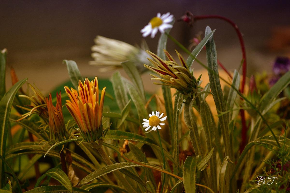 Осенний цвет... - Виктория Гавриленко