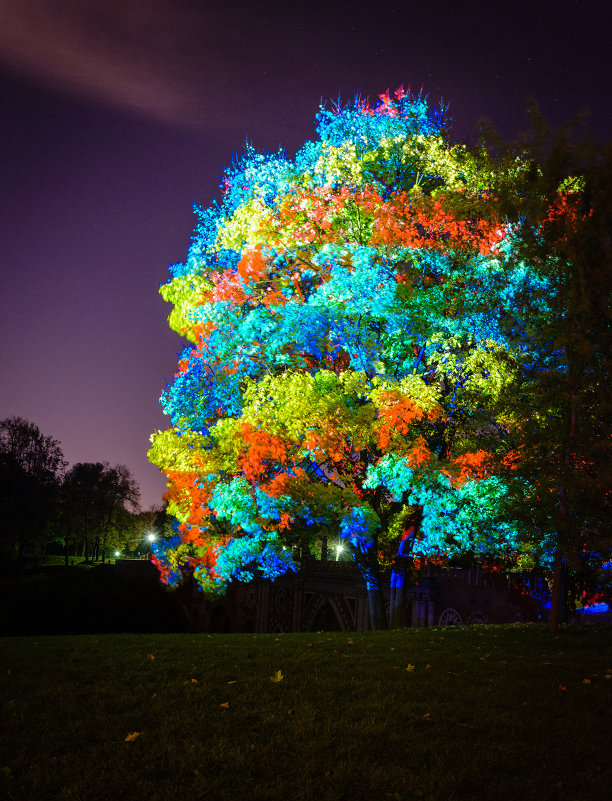 3D дерево (вариант 2) - Анжелика Литвинова