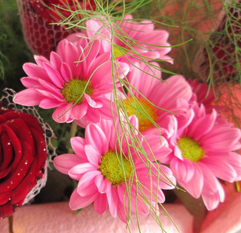 Цветок юлия