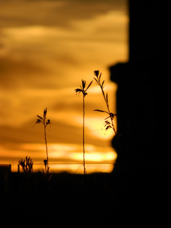 Рижский закат - Lina Liber