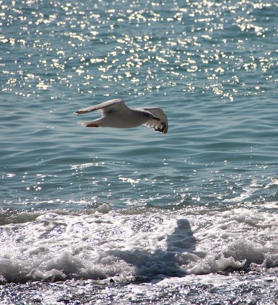 Seagull - Юрий Комаров