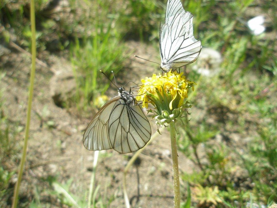 Бабочки - Светлана Неделя