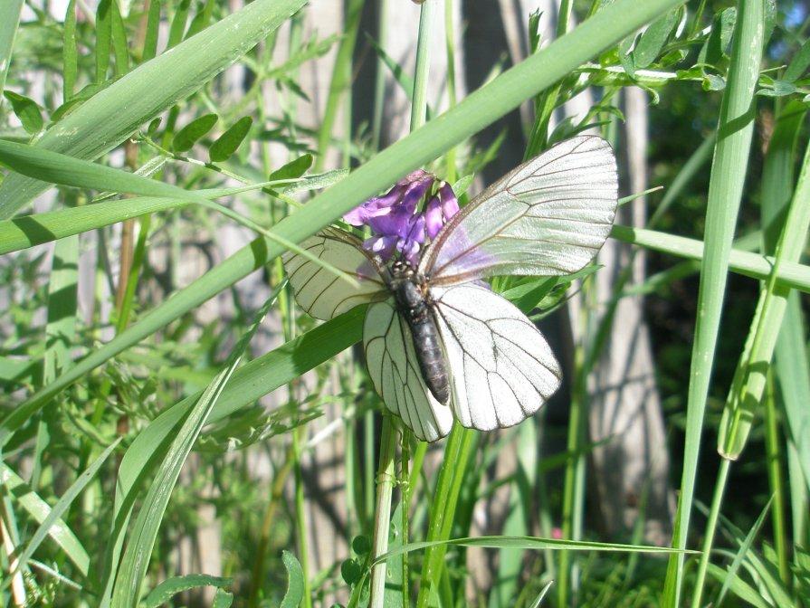 Бабочка - светлана мартынова