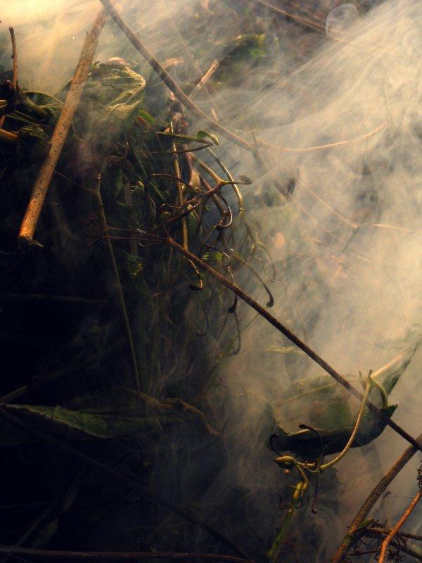 дым - Екатерина Иванченко