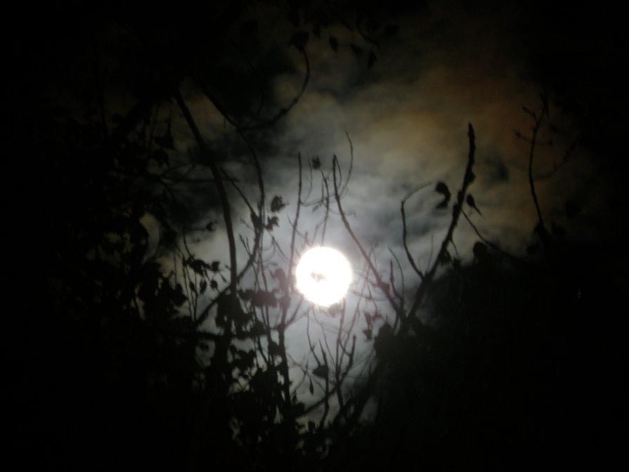 Night - natalia nataria
