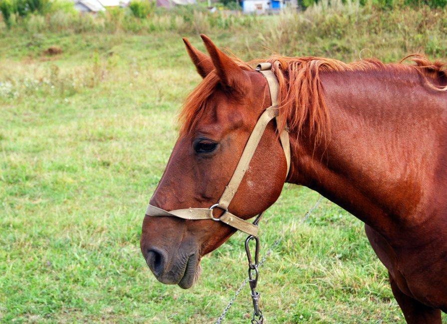 Портрет лошади - Геннадий Федоров
