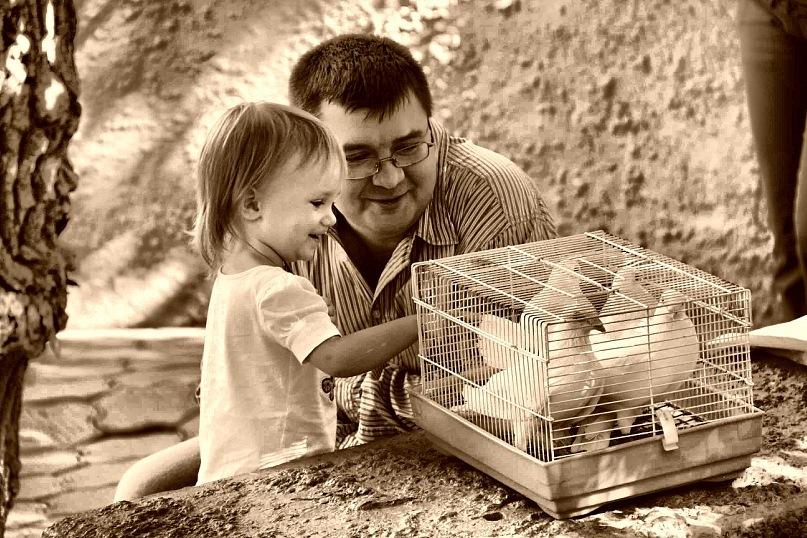 Любовь и голуби - Алекс Мо