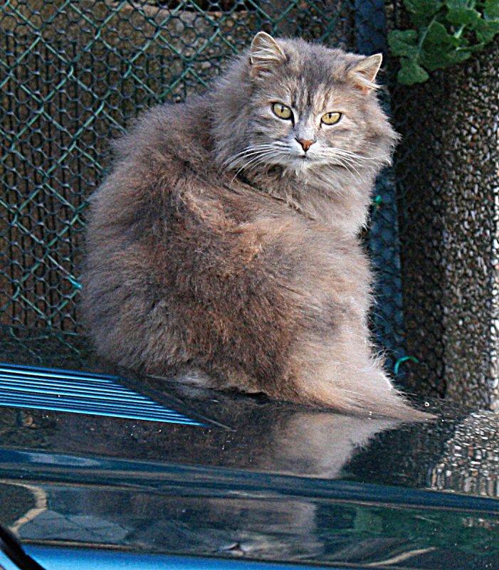 кошка - Korto Maltez