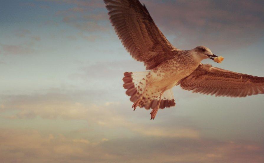 чайка - Кристина Вейт