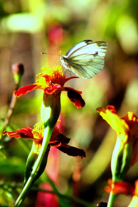 бабочка - Мария Лоськова