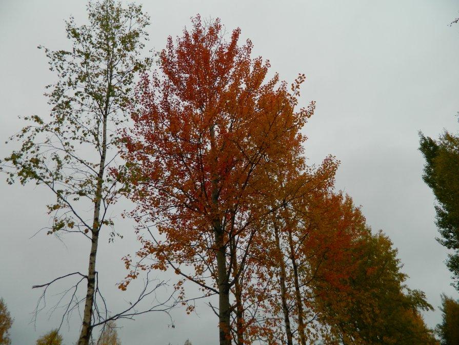 Осенние краски - Натали V