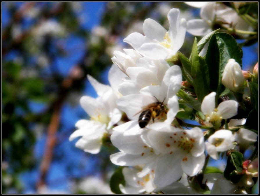 пчела с ведерком)) - Евгения Шикалова