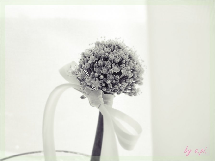 у соцветия лука свадебное настроение :) - Алёна Писаренко