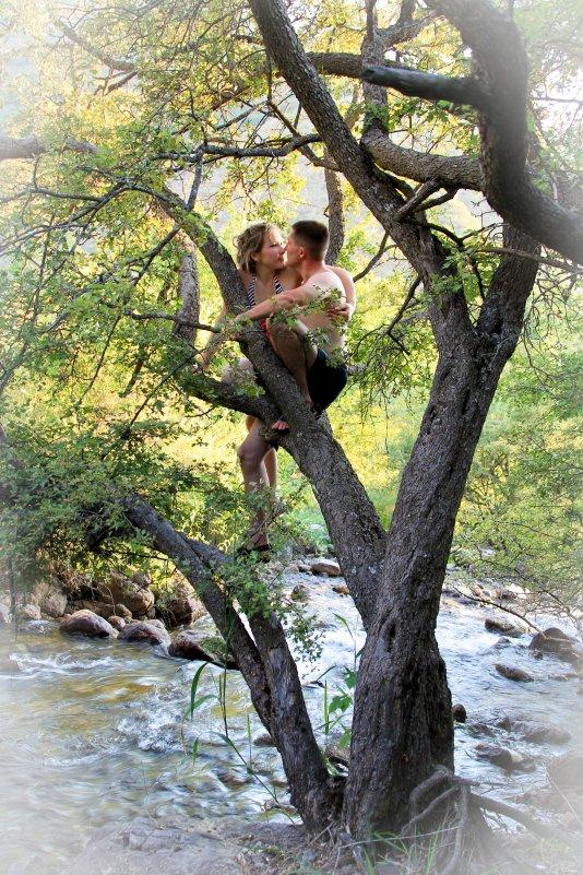 на дереве - Аркадий Краснояров