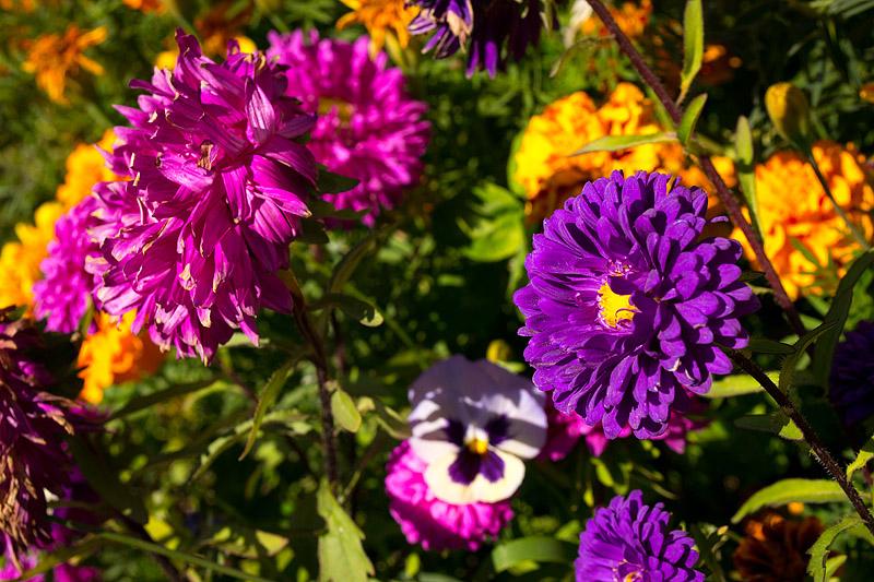 Цветы - Владислав Никитин