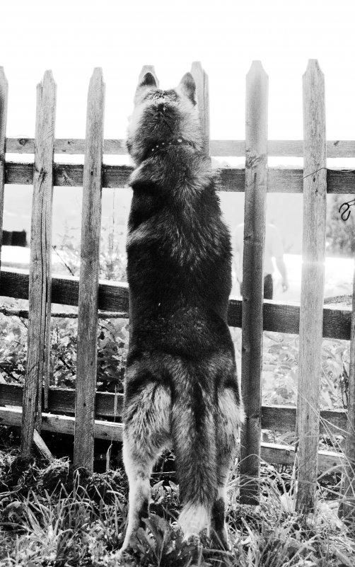 Собака - Маша Путина