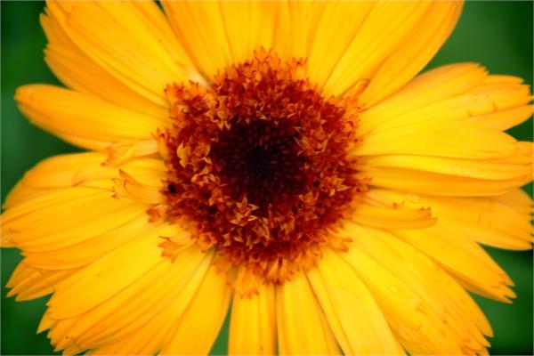 Солнце в цветах - Елизавета Горенкова