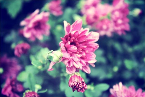 Цветы - Елизавета Горенкова