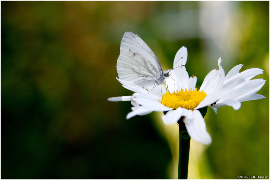 Butterfly 1 - Антон Богданов