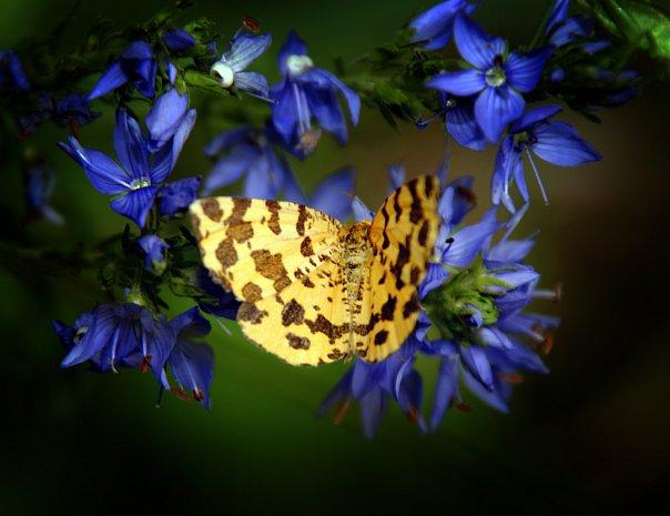 бабочка - Evgeniy Evteev