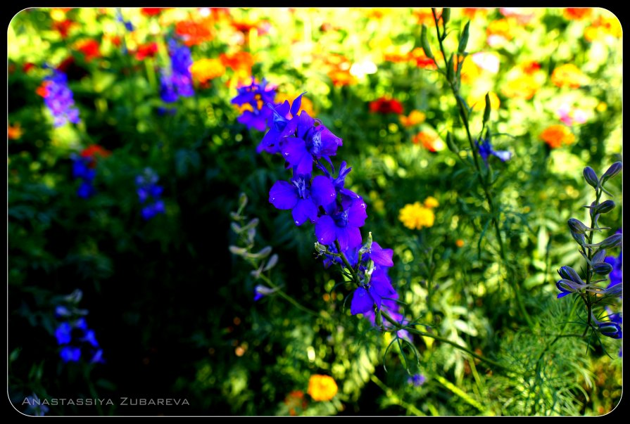 Прекрасный синий цветок - Анастасия Зубарева