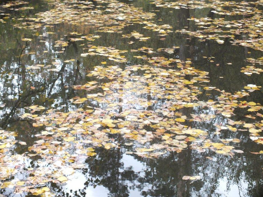 Осень - Светлана Неделя