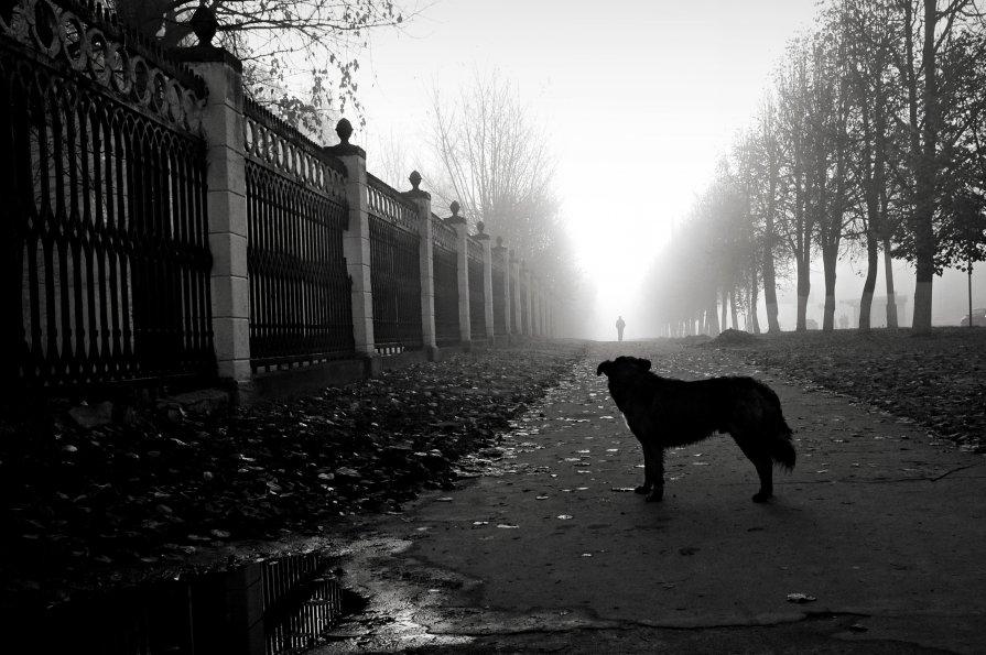 туман - Татьяна Соловьева