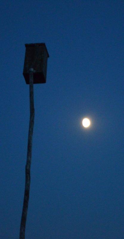 Лунный скворец - Павел Самарович