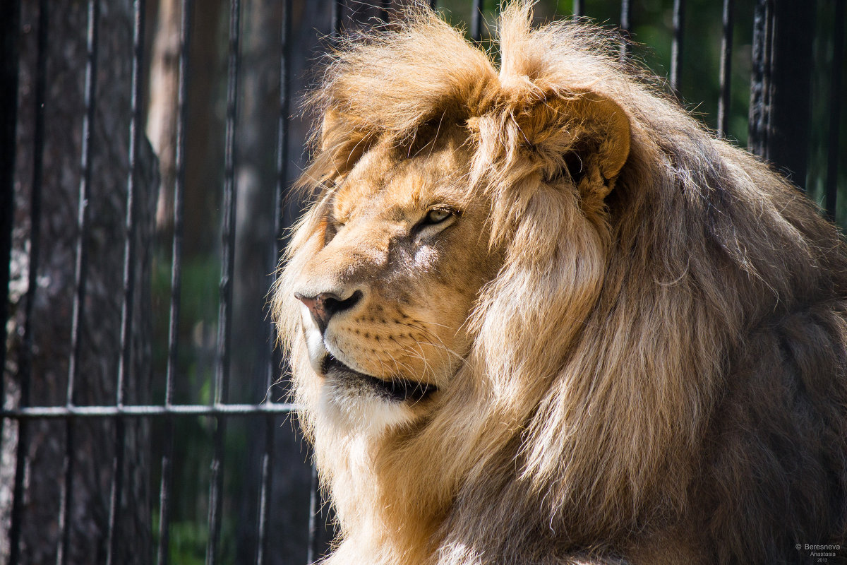 царь, просто царь - Beasta
