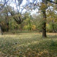 Осень в Таганрогском парке 2010 - №5 :: Валерий Чернобровый