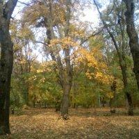 Осень в Таганрогском парке 2010 - №4 :: Валерий Чернобровый