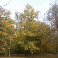 Осень в Таганрогском парке 2010 - №3 :: Валерий Чернобровый