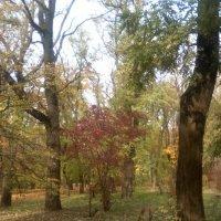 Осень в Таганрогском парке 2010 - №2 :: Валерий Чернобровый