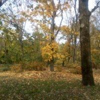 Осень в Таганрогском парке 2010 - №1 :: Валерий Чернобровый