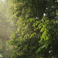 После дождика в четверг.. :: Полина Полевянова