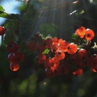 Дары природы :: Алёна Суслова