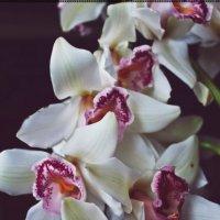 орхидея :: Марина Тиманова