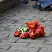 городские цветы :: Елена Березёнкова